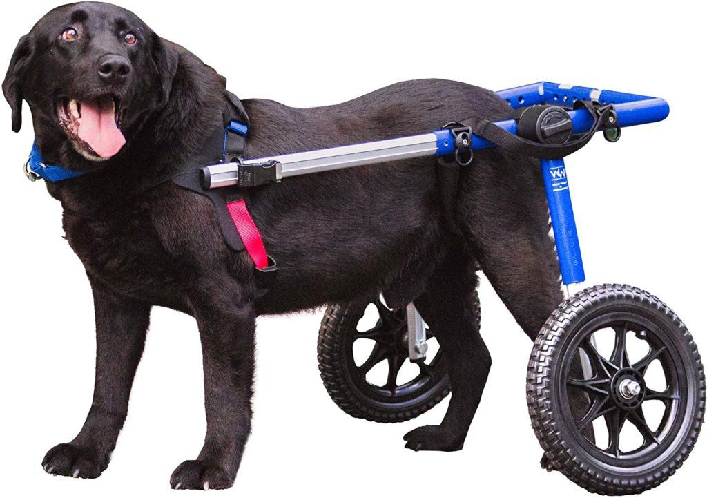 Walkin' Wheels for Large Dogs