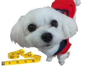 Measuring and weighing your dog