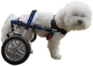 handicapped dog 1