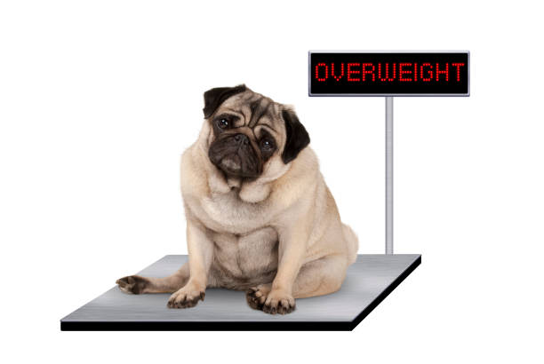 how to weigh a dog